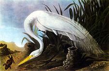 John James Audubon American Egret 15x22 Beautiful Art Print