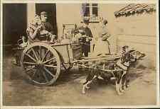Belgique, Laitière Flamande, attelage de chiens  Vintage albumen print.  Tirag