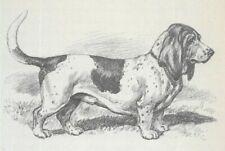 Basset Hound - Vintage Dog Art Print - 1942 Megargee