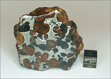 New Pallasite Meteorite Endcut from Habaswein (now Sericho), Kenya - 81.8 grams