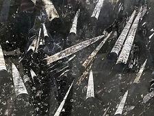 Naturstein Tischplatte Fossilien in Kalkstein Nautilus Ammonit Orthoceraten NEU