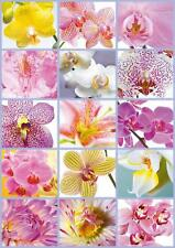 EDUCA JIGSAW PUZZLE COLLAGE OF FLOWERS 1500 PCS #16302