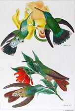 1857,REICHENBACH HUMMINGBIRDS FINE HAND COLOR ENGR. FOLIO U1T