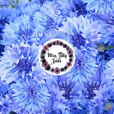 Korn flor 100 semillas vasiliok semillas semillas de flores flores de jardín bancal flores comestibles