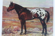 appaloosa horse print vintage art