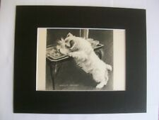 New ListingPrint Sealyham Terrier Morgan Dennis Dog Cocktail Hour 1947 Bookplate 8x10 Mat