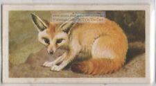 African Fennec Fox Africa Vintage Trade Ad Card