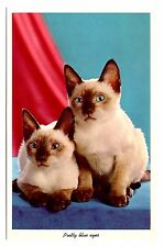 Siamese Cats Postcard Pretty Blue Eyes Animals Vintage Unposted
