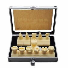 Dental Model  #7009 01 - Cavity Preparation Model