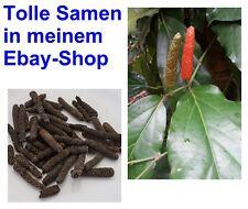 i! LANGER PFEFFER !i Samen Exot Zimmerpflanze Wintergarten Balkon Pflanze Gewürz
