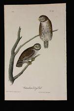AUDUBON'S BIRDS of AMERICA - COLUMBIAN DAY OWL - First Edition Octavo Plate #30
