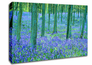 Bluebells In The Forest Forest 05731 Canvas Print Wall Art