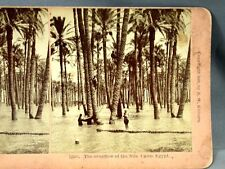 1898 Kilburn Stereoview Card Overflow of Nile River Cairo Egypt Natives in Trees