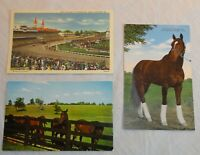 Kentucky Derby Horses Postcards, Whirlaway Souvenir Thoroughbreds KY Old Vintage