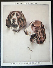 English Springer Spaniel     Vintage Portrait Card   EXC