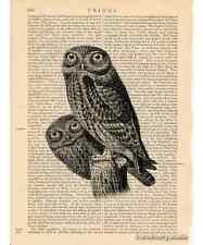 Owl Pair #2 Art Print on Antique Book Page Vintage Illustration Nocturnal Birds