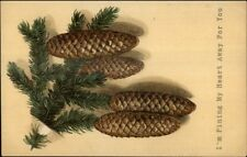 Pine Cones - Pining For You Romance Pun c1910 Embossed Postcard