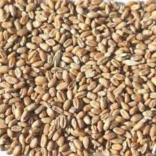 (EUR 0,59/kg) 25kg Weizen Ernte 2019 Hühnerfutter Geflügelfutter aus M-V Körner