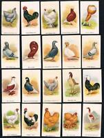 1911 ITC C54 Fowls, Pigeons & Dogs Tobacco Cards Complete Set of 50