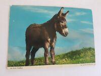 Irish Donkey Postcard Vintage