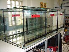Dendrobaten Terrarium 50 x 50 x 60 cm ( L x T x H )