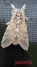 FERTIGES InsektenschutzRollo 100 x 220 cm Fliegengitter - !!! KEIN Bausatz !!!