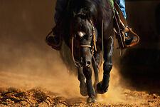 HORSE ART PRINT The Reiner Robert Robert 20x30 Image Conscious