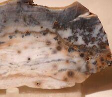 Polka Dot Jasper Agate slab 3.4 oz 95 grams