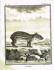 "De Seve's Animals (Buffon) - ""LE PACA"" - Copper Engraving - 1760"