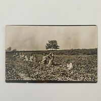 Antique RPPC Real Photograph Postcard Children Working In Field Farming Farm