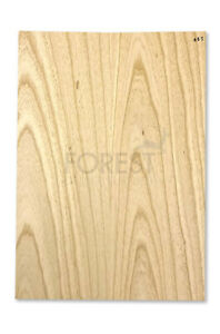 Electric guitar body blank American swamp ash, 2 glued pieces stock 465