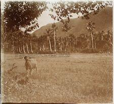 Poulo Condore paysage Indo Chine Photo H2 Plaque de verre Stereo Vintage