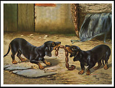DACHSHUND DOGS ARGUING OVER A STRING OF SAUSAGES VINTAGE STYLE DOG PRINT POSTER