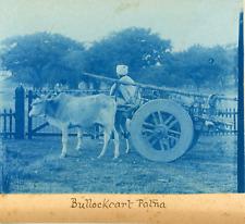 Inde, Patna, Char à boeuf, ca.1898, vintage cyanotype print Vintage cyanotype pr