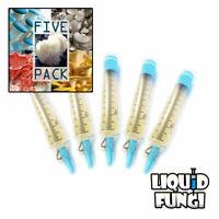 5 Pack Mushroom Liquid Culture Syringes - Spore Free Live Mycelium