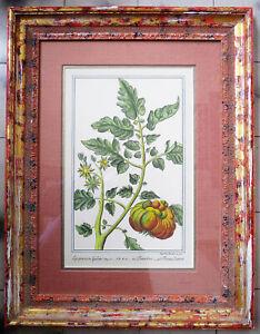 Vintage Botanical Print Framed Art by Guild Master