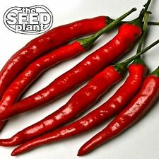 Cayenne Long Slim Pepper Seeds - 100 SEEDS-SAME DAY SHIPPING