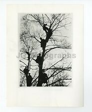 French History - Men in Trees - Vintage Photograph
