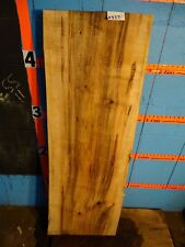 """# A337   2 9/16"""" thick  ambrosia wormy maple Live Edge Slab table bench"""
