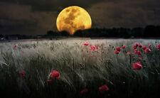 Stampa incorniciata-LUNA ROSSA su un campo di Papavero (PICTURE POSTER PAESAGGIO SCENIC ART)