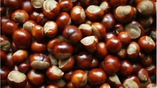 ANTI SPIDER REPELLER 80 REAL HORSE CHESTNUTS CONKERS INSECT REPELLENT ECO HOME