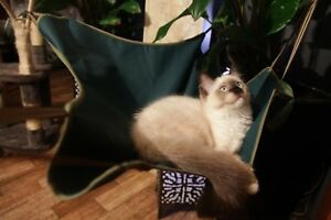 Cat Sling, feline, Hammock  HoundHouse NEW  BUY ONE GET ONE FREE !!!!