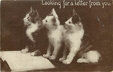 c1910 Cat Postcard; 3 Kittens & Book, Looking for a Letter from You, Posted