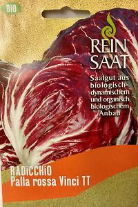 Radicchio Palla rossa - Saatgut - Salat Samen  - Bio - aus biologischem Anbau