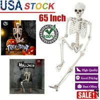 "65"" Posable Full Life Size Skeleton Halloween Party-House Hunted Prop Decor Park"