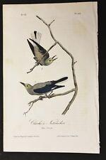 AUDUBON'S BIRDS of AMERICA - CLARKE'S NUTCRACKER - First Edition Octavo plate235