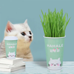Organic Cat Grass Soilless Culture Kit Wheat Seeds Cat Natural Snacks