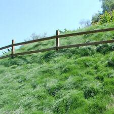 Creeping Red Fescue Grass Seed (Festuca rubra) Shade Tolerant - 5 Lbs.