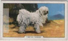 Tibetan Terrier Dog Canine Pet 1930s Ad Trade Card
