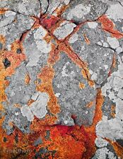 1950s Vintage NATURE LANDSCAPE Rock Lichen Abstract Photo Art 16x20 ELIOT PORTER